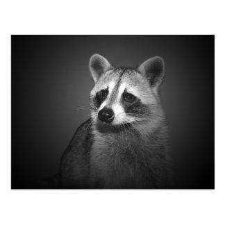 Raccoon Portrait Postcard