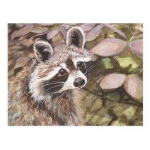 Raccoon Post Card