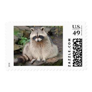 Raccoon Postage Stamp