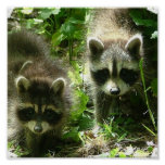 Raccoon Poster Print