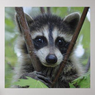 Raccoon Print - #1028 print