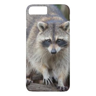 Raccoon, Procyon lotor, Florida, USA 2 iPhone 8 Plus/7 Plus Case