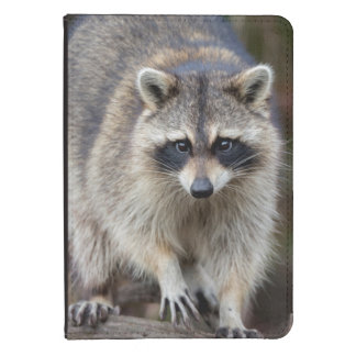 Raccoon, Procyon lotor, Florida, USA 2 Kindle Touch Case