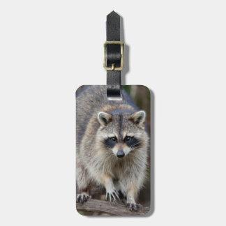 Raccoon, Procyon lotor, Florida, USA 2 Tag For Luggage