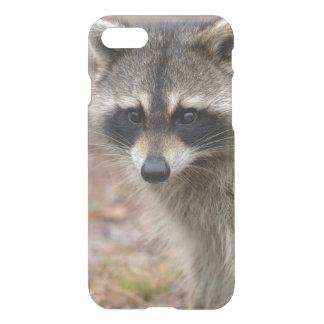Raccoon, Procyon lotor, Florida, USA 3 iPhone 8/7 Case
