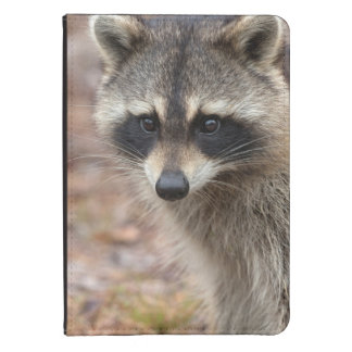 Raccoon, Procyon lotor, Florida, USA 3 Kindle Touch Case