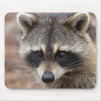 Raccoon, Procyon lotor, Florida, USA 3 Mouse Pad