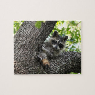Raccoon - puzzle