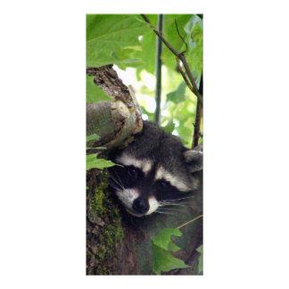 Raccoon Rack Card