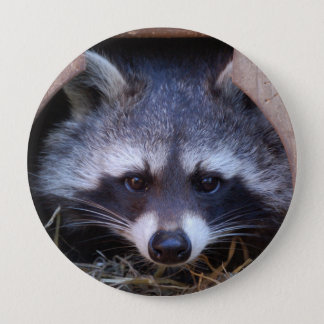 Raccoon Racoon Button