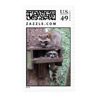 Raccoon Rascals Postage