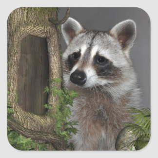 Raccoon Square Sticker