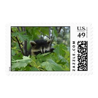 Raccoon - stamp