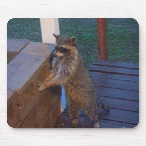 Raccoon Standing on Back Porch Mouse Pad