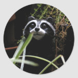 Raccoon Sticker