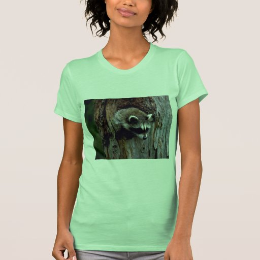 Raccoon-Summer-youngster in hollow tree Shirts