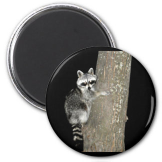 RACCOON - THE LITTLE BANDIT 2 INCH ROUND MAGNET