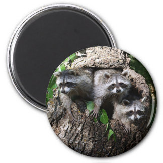 Raccoon - The Three Amigos 2 Inch Round Magnet
