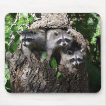 Raccoon - The Three Amigos Mouse Pad