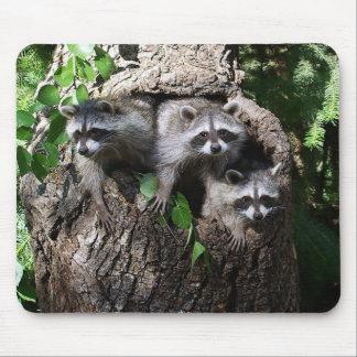 Raccoon - The Three Amigos Mouse Pad