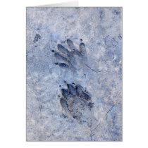 Raccoon Tracks--1