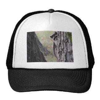 Raccoon Trucker Hat