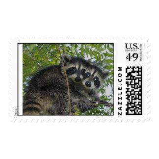 Raccoon Twins - Postage Stamps