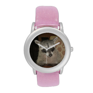 Raccoon Watch