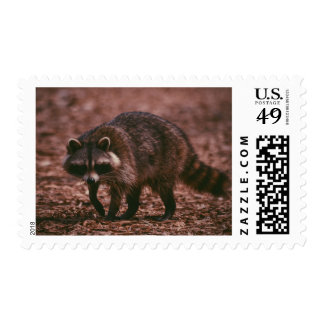 RACCOON WILDLIFE POSTAGE