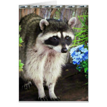 Raccoon With Blue Flowers And Feathers