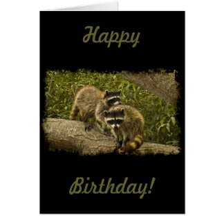 Raccoons Birthday Greeting Card