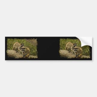 Raccoons Bumper Sticker