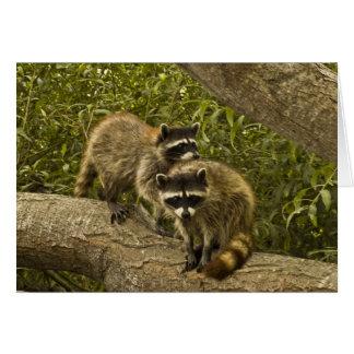 Raccoons Card