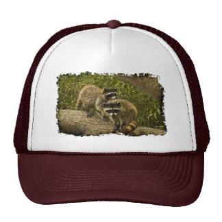 Raccoons Mesh Hat