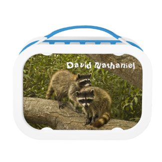 Raccoons Lunchboxes