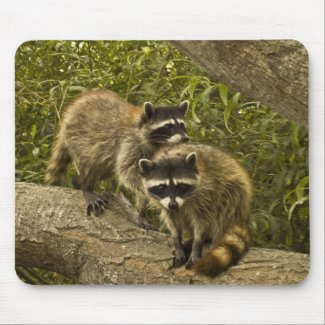 Raccoons Mouse Pads