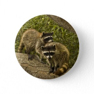 Raccoons Pinback Button