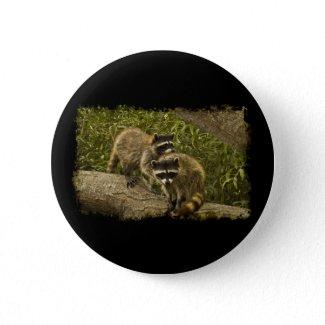 Raccoons Pinback Buttons