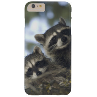 Raccoons Procyon Lotor) of Fish Lake, Central Barely There iPhone 6 Plus Case
