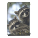 Raccoons Procyon Lotor) of Fish Lake, Central iPad Mini Retina Case