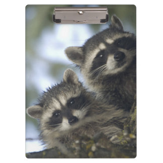 Raccoons Procyon Lotor) of Fish Lake, Central Clipboard