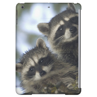 Raccoons Procyon Lotor of Fish Lake Central Cover For iPad Air