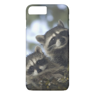 Raccoons Procyon Lotor) of Fish Lake, Central iPhone 7 Plus Case