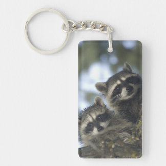 Raccoons Procyon Lotor) of Fish Lake, Central Keychain