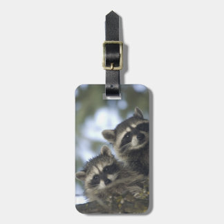 Raccoons Procyon Lotor) of Fish Lake, Central Luggage Tag
