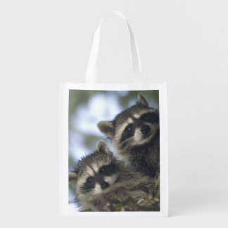 Raccoons Procyon Lotor) of Fish Lake, Central Market Totes