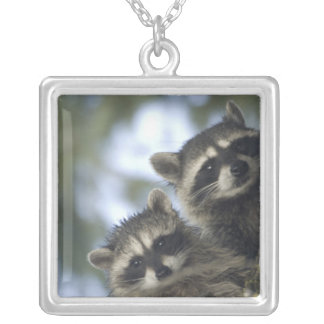 Raccoons Procyon Lotor) of Fish Lake, Central Silver Plated Necklace