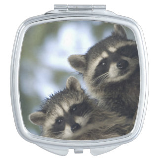 Raccoons Procyon Lotor) of Fish Lake, Central Vanity Mirror