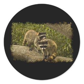 Raccoons Round Stickers