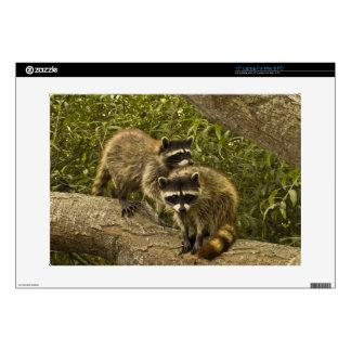 Raccoons Laptop Decal